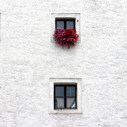 freetoedit wall white flowers window