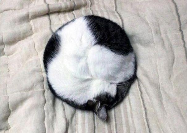 #cat,#blancoynegro,#blackandwhite