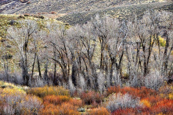 #nature,#landscape,#trees,#colors,#utah,#freetoedit